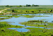 Vast expanse of green flora and reflecting ponds in the wetlands