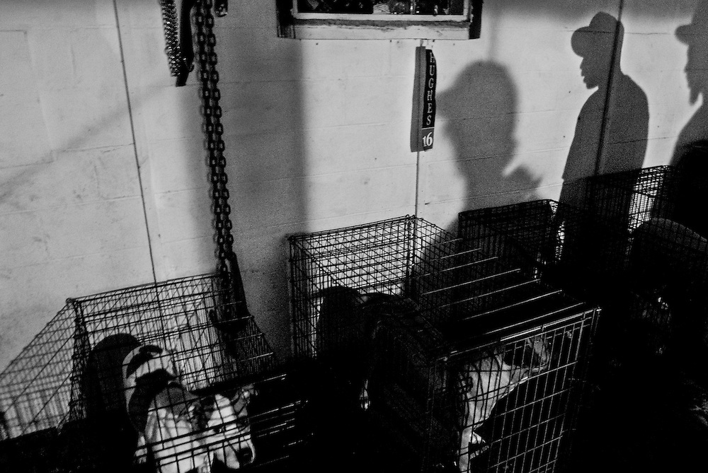 Caged dogs are pictured in the basement of the B-House during an all night party in Gary, Indiana. Members of the B-House deal in narcotics and prostitution.   (© William B. Plowman/Redux)
