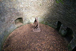 Sheffield Botanical Gardens Bear Pit is the finest surviving examples in the UK. It is a Grade II listed structure built in 1836 to home a black bear. In 1855 2 brown bears were kept in the gardens Bear Pit but little is known about how long for. Local legend has it that a child was killed after falling into the pit around 1870.<br /> <br /> The Bear Pit was fully repaired during the restoration of the Gardens, the old railings were replaced, grilles have been re-instated and can be pulled across the entrance to the Pit, and two side dens where the bears were housed. In 2005 a 2.4 meter tall steel sculpture of a bear was installed in the pit to remind visitors of its former use.<br /> <br />   11 September 2016<br />   Copyright Paul David Drabble<br />   www.pauldaviddrabble.photoshelter.com