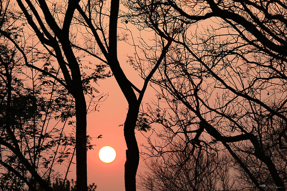 Trees in silhouette against a pink sunrise sky