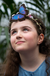 © Licensed to London News Pictures. 28/03/2018. London, UK. A butterfly lands on the head of Freya Gordon, aged 10, at the 'Sensational Butterflies' exhibition at the Natural History Museum, returning for it's tenth year. Photo credit : Tom Nicholson/LNP