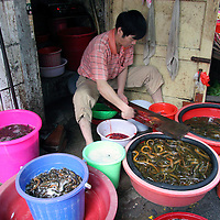 Asia, China, Chongqing. Local vendor prepares eels for selling in the local street market in Chongqing.