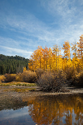 """""""Aspen Reflections 2"""" - Photograph of yellow aspen trees in the fall at a pond near Spooner Lake, Nevada."""