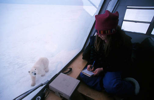 Polar Bear, (Ursus maritimus) Sylvia Novotny photographs bears with Dad. Churchill, Manitoba. Canada.