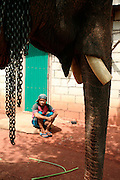 9 June 2009 - Botene, Laos - A mahout with his elephant waiting for treatment from vets from ElefantAsia. ElefantAsia is a Laos based NGO set-up by two frenchmen working to save the Laos elephant. Two frenchmen Sebastien Duffillot and Gilles Maurer founded ElefantAsia in 2001, who's President is Dr Norin Chai, senior veterinarian at the French National Museum of Natural History, with the aim of saving the rapidly dimishing elephant numbers in Laos..Much of their work is conducted in the remote Sayaboury Province of Laos, a region home to 75% of the nation's domesticated elephant population and one of Laos' largest remaining wild elephant populations. With the traditional mahout culture still alive and active in Sayaboury, ElefantAsia strives to achieve a balance between wildlife utilization and effective species conservation and breeding. Photo credit: Luke Duggleby