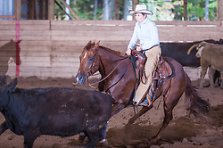 September 23, 2017 - Minshall Farm Cutting 5, held at Minshall Farms, Hillsburgh Ontario. The event was put on by the Ontario Cutting Horse Association. Riding in the $1,000 Amateur Class is Lynne Purdie on Timothy Taz owned by the rider.