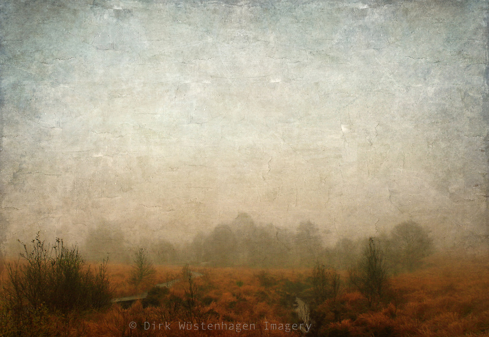 The Hogh Fens in Belgion on a foggy November day