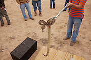Onlookers gather around as a Sweetwater Jaycees member shows off a previously caught rattlesnake outside of Sweetwater, Texas during a hunt during the 55th Annual Sweetwater Rattlesnake Round-Up on Friday, March 8, 2013.