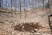 Vernal Pool in woods; NJ; Cora Hartshorne Arboretum