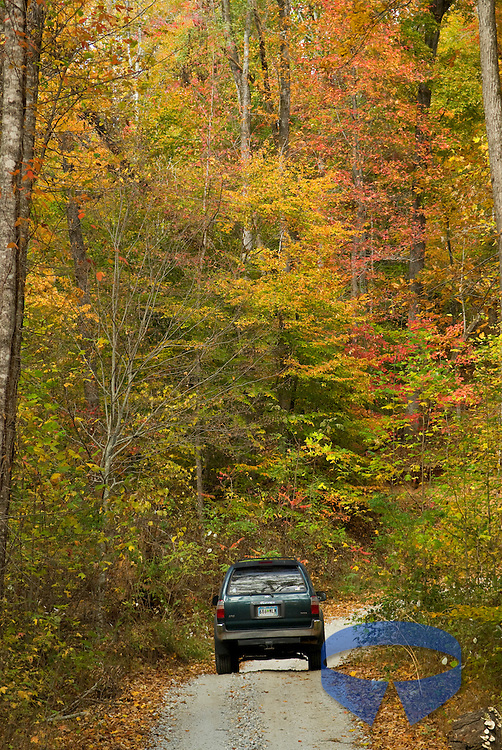 Fall color on Horse Pasture Road in the Jocassee Gorges area in South Carolina (SC).