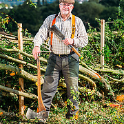 20/09/15 Stanley, Derbyshire - Derek Hale taking part in the hedge laying competition at Stanley Grange Farmon Sunday