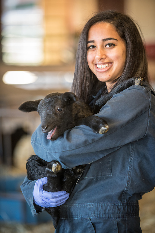 Young adult female smiles while holding a lamb in her arms, College Park, Maryland