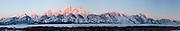 Panoramic aspenglow sunrise of the Grand Teton Mountains