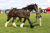 Class 06 - Broodmare - Shires