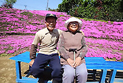 A Husband Spent Two Years Planting Thousands Of Flowers For His Blind Wife To Smell<br /> <br /> In Shintomi Town, Japan, there's a field that more than 7,000 people flock to every spring. Every year, it bursts into a sea of thousands of pink flowers, which were all planted by a single man for what may be the most adorable reason ever.<br /> <br /> Once a dairy farm, the land was brought by a young Mr and Mrs Kuroki, after they married in 1956... After 30 years of marriage and raising a herd of cows together, Mrs Kuroki lost her vision in just a week because of a complication from diabetes. Mrs Kuroki began to shut herself away and began living a life of seclusion in her home. Mr Kuroki figured that if he could get a few people to visit his wife every day, it would cheer her up. So he spent the best part of two years creating the foundation for a garden, chopping down trees and planting flowers. Eventually, their home was surrounded by an ocean of sweet-smelling pink flowers. More than a decade after the first seeds were planted, thousands of lovers flock to the field every year. Mr and Mrs Kuroki still walk in their garden every day, and Mrs Kuroki seems to have cheered up considerably..<br /> ©Yoshiyuki Matsumoto/Exclusivepix Media