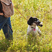 Photography of the Cocker Spaniel Hunting Enthusiasts Of Southeastern Wisconsin (CSHESEW) Hunt Test. The event took place at the Mazomanie Unit Lower Wisconsin Riverway, in Mazomanie , WI, July 25-26, 2015.