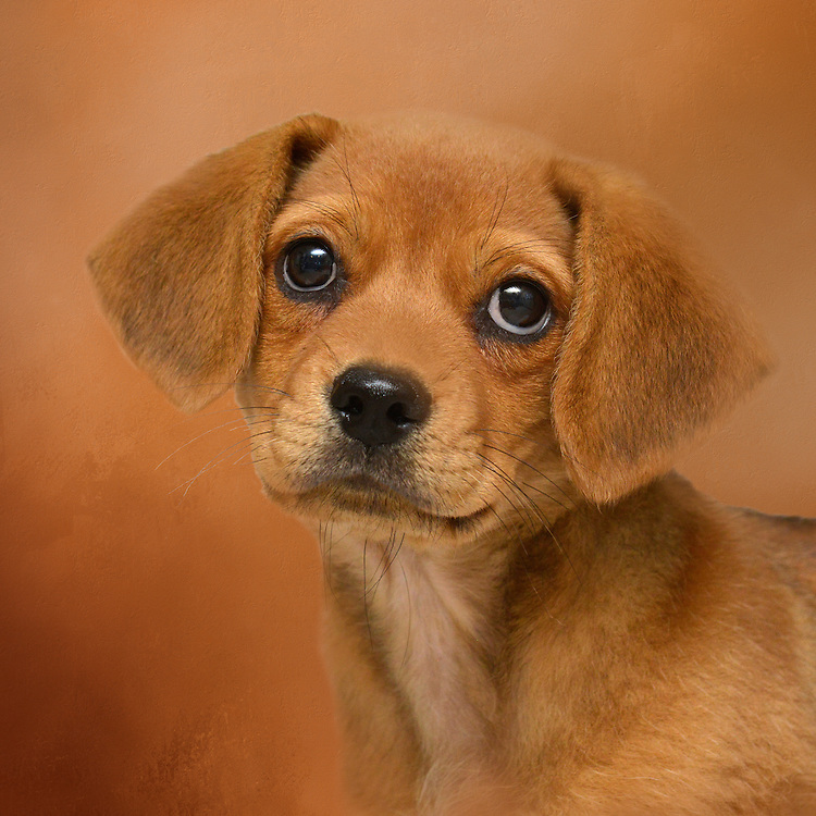 Visit STORE/DOGS & PUPPIES to purchase prints/products.  Visit STOCK/DOGS & PUPPIES to purchase a license for publication.