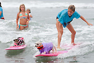 Pint-sized pooches Kia and Paco go head to head on a wave.