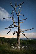 A single tree seen against a star filled sky along Skyline Drive, Shenandoah National Park, Virginia.
