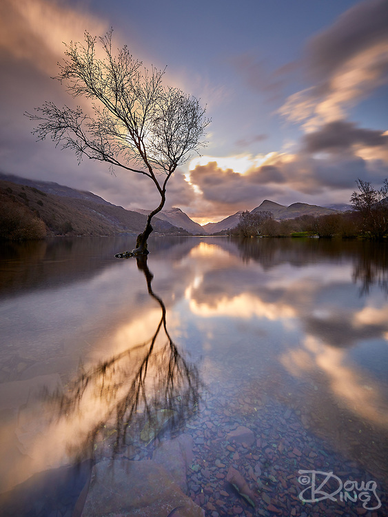 I have always loved the play of light over the lakes in Snowdonia and the passing of storm Freya in the night afforded near perfect dawn conditions to capture the Lone Tree of Lake Padarn with the sun rising in the notch of the Llanberis Pass. The breathless air and crystal clear water added another dimension to the image with the clear view of the slate slag lake bed blending into the reflection of the clouds.<br />