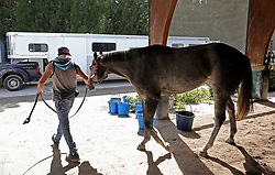 At Gulfstream racetrack, Pinky, a Florida bred filly that has won 7 races in her short career is loaded in a transport trailer. Jerry Bennett had already taken 30 of his horses to Ocala and was loading another 10 for the journey before Hurricane Irma. (Photo by Mike Stocker /Sun Sentinel/TNS/Sipa USA)<br />SOUTH FLORIDA OUT; NO MAGS; NO SALES; NO INTERNET; NO TV