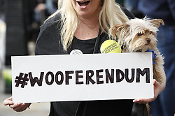 """© Licensed to London News Pictures. 07/10/2018. London, UK. Pro-remain dog owners march to Parliament to demand a """"People's Vote"""" on the final Brexit agreement. Photo credit: Peter Macdiarmid/LNP"""