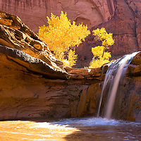 Coyote Gulch is similar to hiking the Narrows in Zion only you're hiking up a red-walled canyon with waterfalls, cottonwoods, Anasazi ruins and incredible arches.We hiked around one of the bends and discovered this cool waterfall.