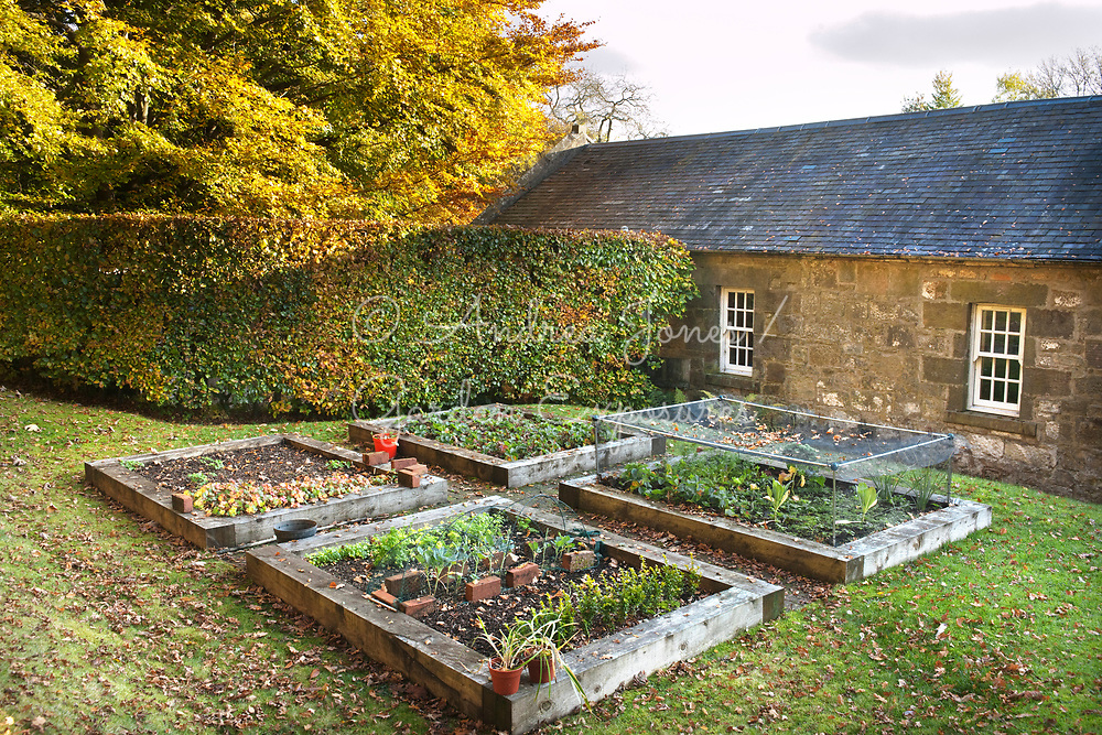 Raised beds for fruit and vegetables on the lawn near back door to the house