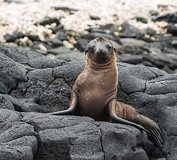 Seal pup waiting for mom to return from the sea.