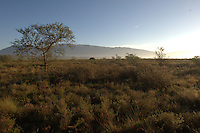 Open grassland at Bontebok National Park, Western Cape, South Africa