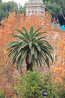Palm trees are abundant within the grounds of Park Guell in Barcelona, Spain.