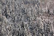 Snowy Trees near Chamonix, a ski resort in the French Alps