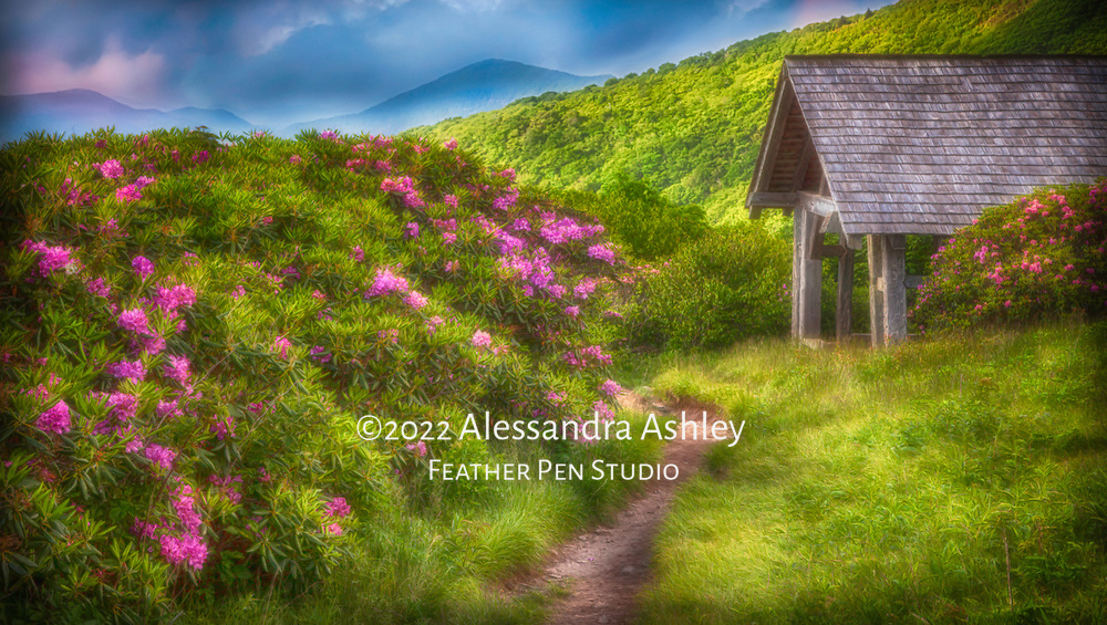 Late spring rhododendron garden in full bloom atop Craggy Gardens Trail, off Asheville, North Carolina's Blue Ridge Parkway. Light painting and soft glow effects added to enhance dreamlike impact of scene.
