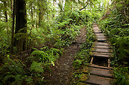 West Coast Trail - Day 2. The wet and harsh conditions of the WCT lead to the destruction of the lifesaving boardwalk.