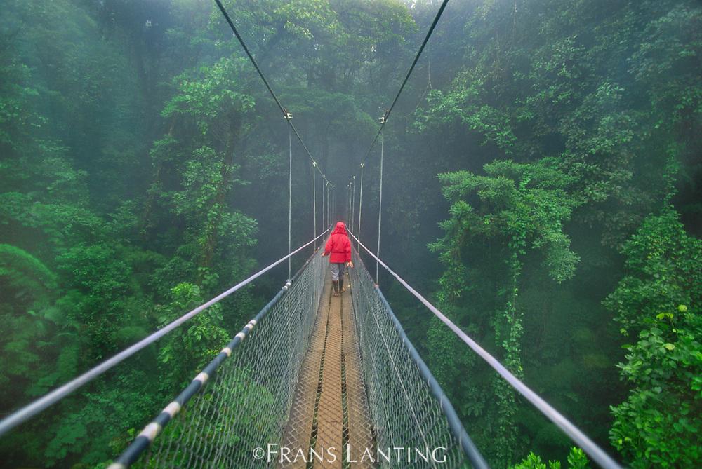Hiker on canopy walkway, Monteverde Cloud Forest Preserve, Costa Rica, model release