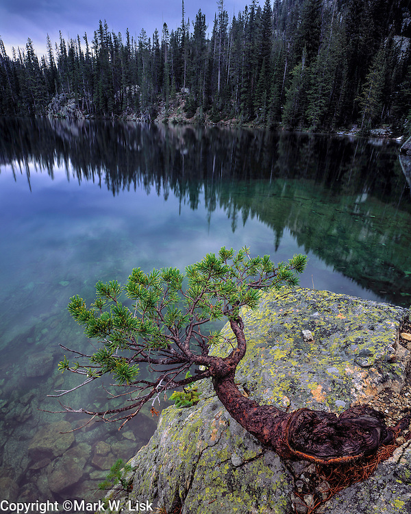 Drawfed pine tree sits on a granite boulder on the edge of Alpine Lake in the Sawtooth Wilderness, Idaho.