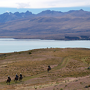 Horse trekking on the top of Mount John overlooking Lake Tekapo and the Mackenzie Country, South Island, New Zealand. 24th February 2011, Photo Tim Clayton