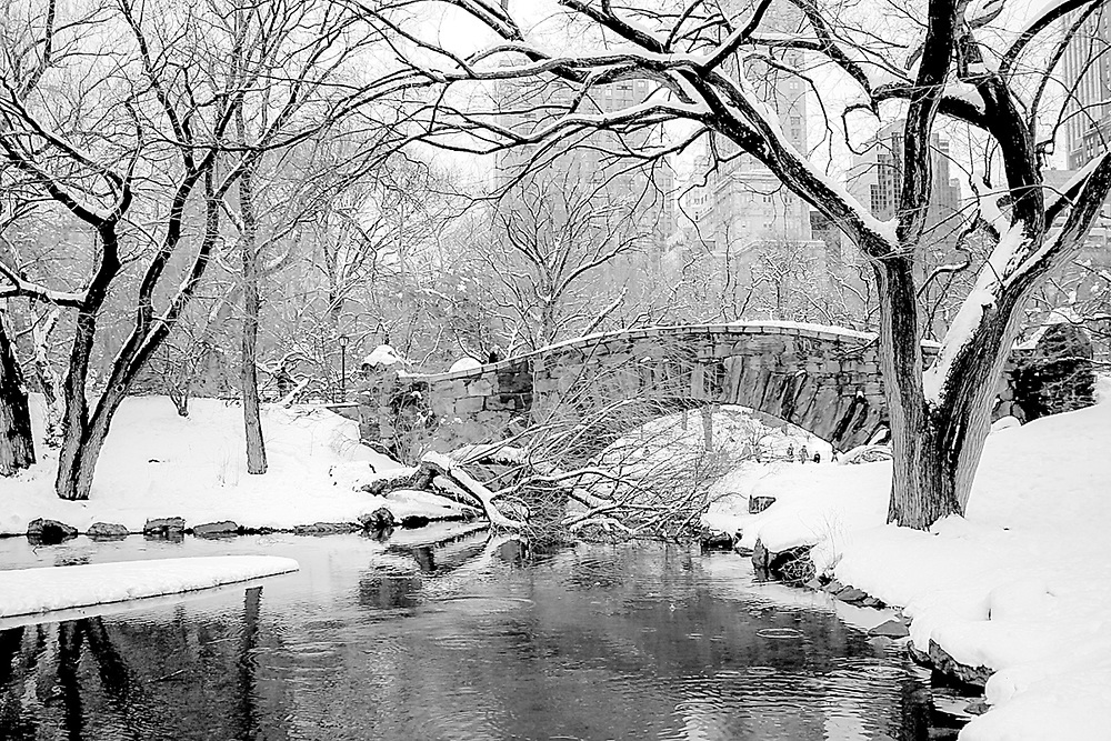 Central park in winter. 2010
