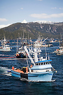 Commercial fishing seiners work to set and bring in their nets during the 2007 Sitka Herring Sac Roe fishery.