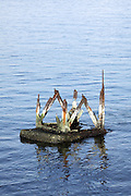 piece of a rusted metal pilllar standing in the water