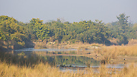 View of wetland and forest in Bardia National Park, Nepal