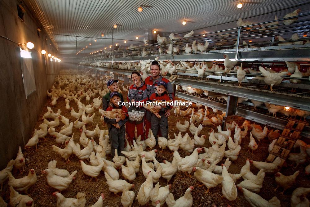 26032009, Totenvika.HØNEFAMILIEN: Hele familien Helgestad i hønsehuset for å samle egg fra 7500 høner som daglig legger ett egg hver. Fra venstre Ole Martin (12), Marthe (9), Anne Lene (37), Haaken (43) og Vilde (7). ..Foto: Daniel Sannum Lauten/VG