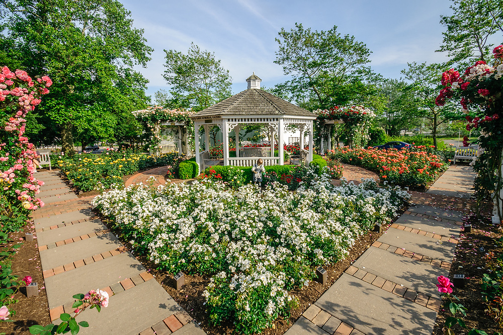 Rose Garden, Southampton, NY Long Island, New York