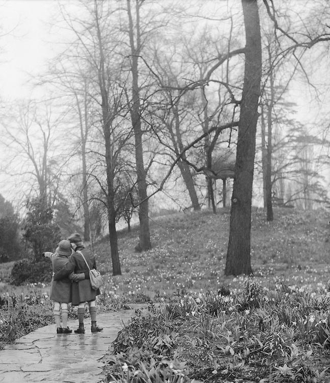 Kensington Gardens, Daffodils, London, 1933