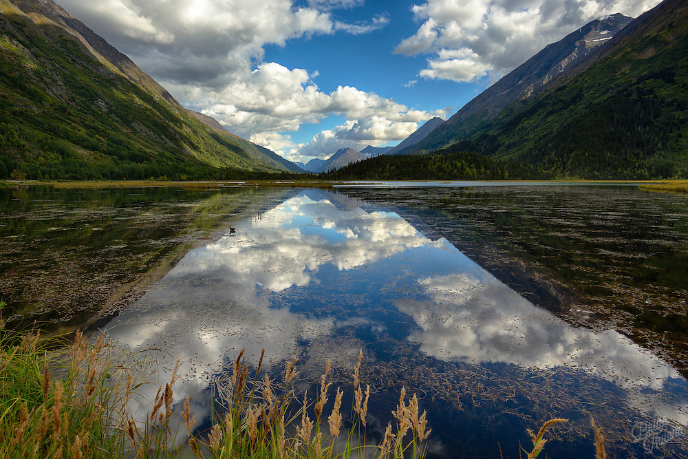 A lone duck basks in the calm lake's mirror reflection of the Chugach mountain valley.