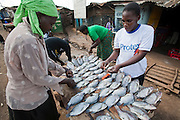 Fishmongers sort tilapia on a market stall before  frying it and selling it to passing customers in the Kibera slum in Nairobi, Kenya.  Kibera is Africa's biggest slum with nearly one million inhabitants.