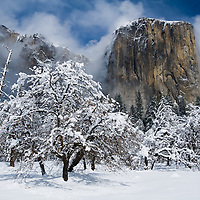 Yosemite in winter is one best seasons to experience Yosemite National Park. Without all the crowds you can find peace and solitude as Yosemite is transformed by winter. <br /> <br /> This was one of those trips when we timed it just right. We arrived into Yosemite Valley the night before as a snowstorm dumped a couple feet of winter powder overnight. We woke up this is magical winter wonderland in Yosemite Valley as the storm cloud were clearing. We drove around the valley capturing the beauty. Within minutes of this shot there was an avalanche on the left side of El Capitan. Yosemite in winter is such a great time of year to go!