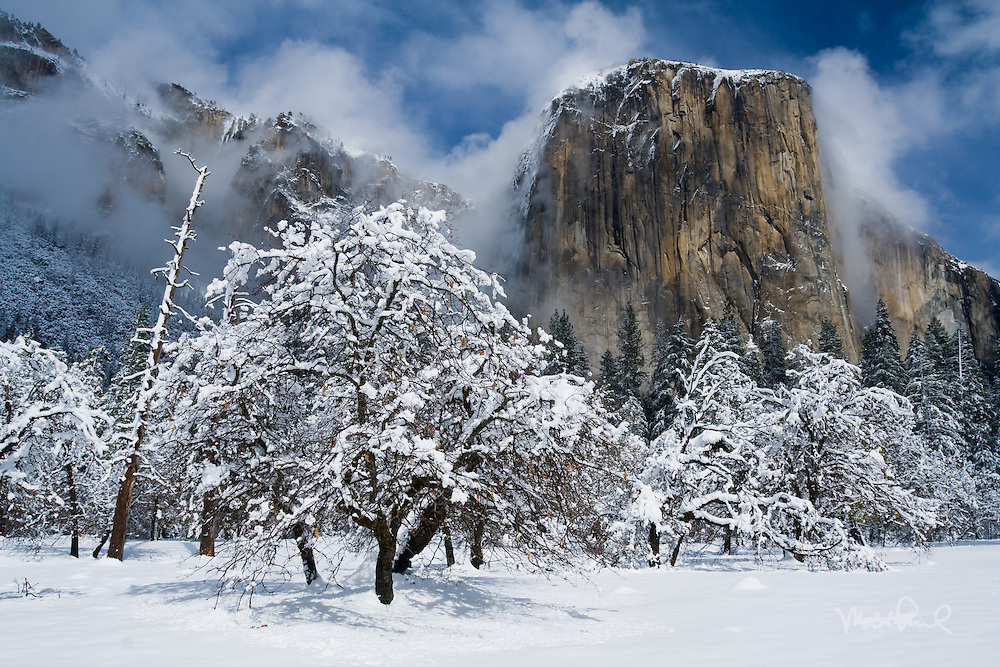 The snowstorm from the night before blanketed the granite ediffice of El Captian and black oak trees alike. As we were gazing up, massive amounts of snow came crashing off El Capitan creating an avalanche.