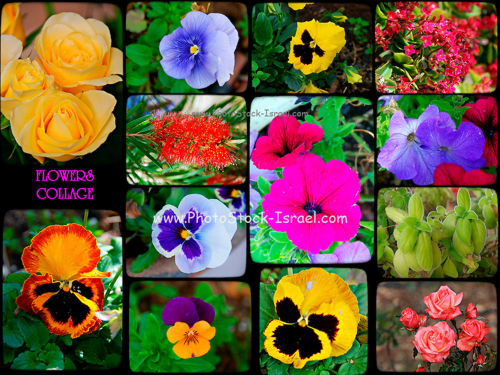 collage of garden flowers
