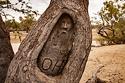 """Carved face near ' 1860/61 Burke & Wills expedition """"Dig Tree"""", Cooper River billabong, southern Queensland, Australia"""